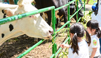 [School] Cowboy Farm Fieldtrip